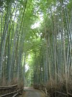 Nishigamo02