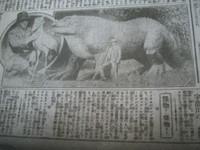 Taisyou15_kaibutu